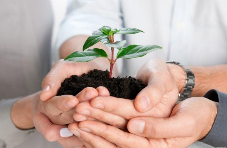 Меры поддержки для малого и среднего бизнеса
