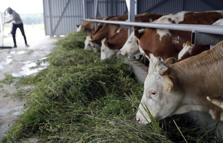 Идёт приём заявок на получение грантов на поддержку и развитие семейных животноводческих ферм
