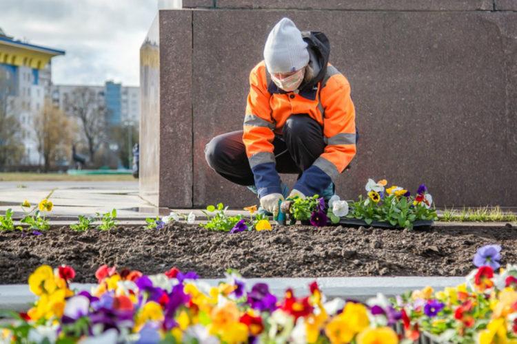 Около290 тысяч цветов высадили весной вОдинцовском округе